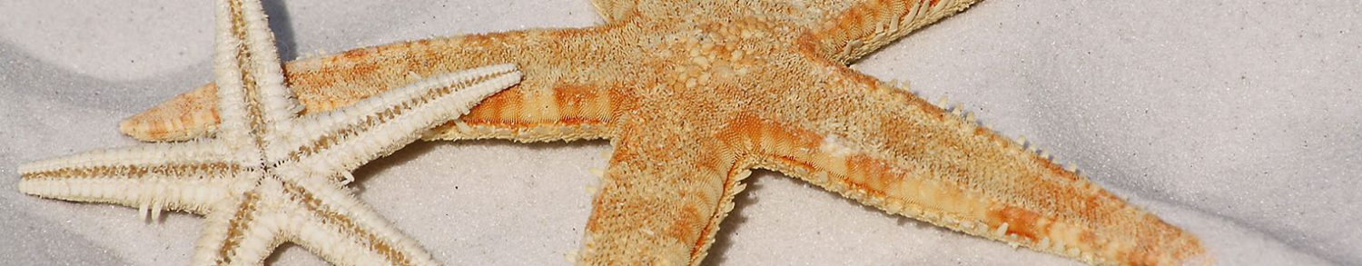 slider_0021_starfish-343791