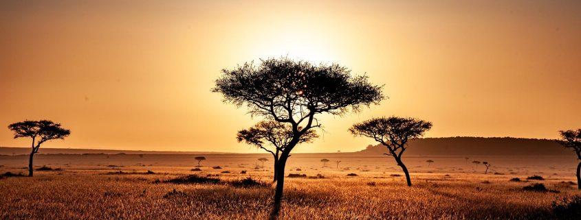 Kenya Savannah Safari